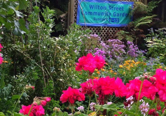 Wilton St Community Garden November 2012